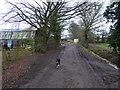 TQ0721 : Dog at crossing paths by Shazz