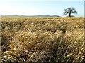 SO8542 : Farmland above Ryall's Court Farm by Philip Halling