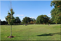 TQ2636 : Goffs Park (5) by Barry Shimmon