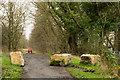 NZ2341 : Boulders on Deerness Valley Railway Walk by Trevor Littlewood