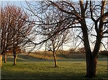 J3731 : Hibernating trees in Newcastle's Islands Park by Eric Jones