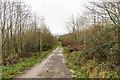 ST7366 : Primrose Hill Community Woodland by Ian Capper