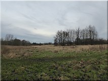 SJ8851 : Rough grassland at Whitfield Valley LNR by Jonathan Hutchins