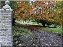 SE7290 : Anserdale Lane, Lastingham, Yorkshire by Bernard Sharp