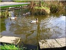 SS9674 : Duckpond, Llysworney by Alan Hughes