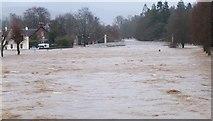 NT2540 : River Tweed in flood, Kingsmeadows Peebles by Jim Barton
