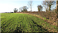TG3910 : Winter cereal crop field and field boundary hedge by Evelyn Simak