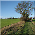 TL3639 : Bridle path to Royston by John Sutton