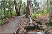 NS2209 : Carse Walk, Culzean Country Park by Billy McCrorie