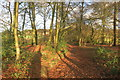 SP8403 : Chiltern Way in the woods by Des Blenkinsopp