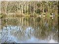 SX8674 : Abbrook Pond, Kingsteignton by Chris Allen