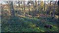 TQ2997 : Japanese Water Garden Trent Park, Enfield by Christine Matthews