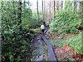 SN0213 : Llwybr Oxland Wood by Alan Richards