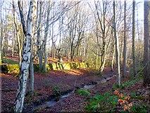 NY9562 : Dukeshouse Wood by Oliver Dixon