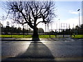 H4572 : Tree and shadow, Omagh by Kenneth  Allen