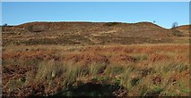 SE4699 : Scarth Wood Moor by Derek Harper