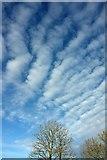 SX9065 : Clouds above Torquay by Derek Harper