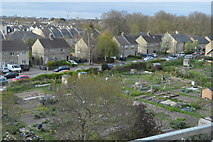 TL4658 : Allotments, Harvest Way by N Chadwick