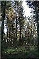 SE5283 : Woodland on Cote Moor by Derek Harper