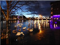 SO8454 : Flooded River Severn at dusk by Philip Halling