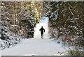 NT2741 : Runner in Glentress Forest by Jim Barton