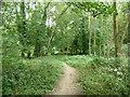 TQ5781 : Woodland path by Robin Webster