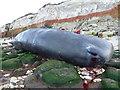 TF6741 : Dead sperm whale, Hunstanton - 12 by Richard Humphrey
