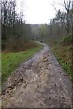 SE2968 : Bridleway through Mackershaw Wood by DS Pugh