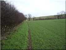 TA0779 : Hedgerow beside crop field, West Flotmanby by JThomas