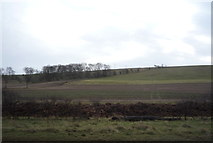 TA0779 : Farmland, Flotmanby Brow by JThomas