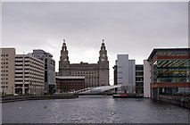 SJ3390 : Royal Liver Building from Princes Dock (2) by The Carlisle Kid