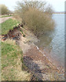 SK0307 : Lake shore erosion, Chasewater near Brownhills by Robin Stott