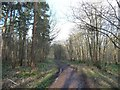 SE5533 : Path heading north-west, Bishop Wood by Christine Johnstone
