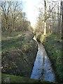 SE5533 : Main Drain, Bishop Wood, looking upstream by Christine Johnstone