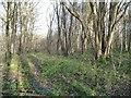 SE5533 : Barley Close, Bishop Wood by Christine Johnstone