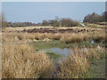 SK0308 : Wet and dry heath, Chasewater country park by Robin Stott