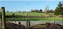 SX9890 : Straw bales by Oil Mill Lane by Derek Harper