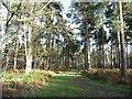 SE5633 : Path heading north-east, Bishop Wood by Christine Johnstone