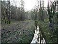 SE5633 : Main Drain, Bishop Wood, looking downstream by Christine Johnstone