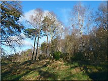 NS4276 : The former site of Hill of Garshake Farm by Lairich Rig