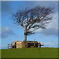 SO9825 : Tree atop Cleeve Cloud by Jonathan Billinger