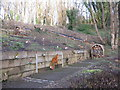 NT2470 : Encouraging wildlife in the Hermitage of Braid by M J Richardson