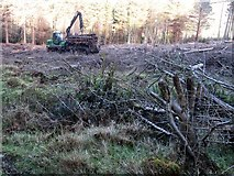J3530 : Harvesting timber in Donard Wood by Eric Jones