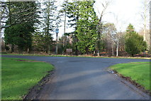 NS2209 : Junction with Piper's Brae, Culzean Country Park by Billy McCrorie