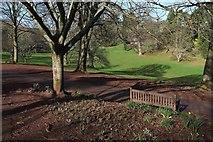 SX8963 : Cockington Court country park by Derek Harper