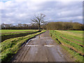 TL8323 : Byway towards Bungate Wood by Robin Webster