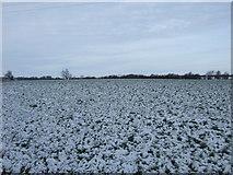 NZ2219 : Snowy field, Walworth by JThomas