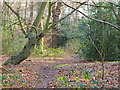 TQ4092 : Sun after a rainy day in Knighton Wood, Epping Forest by Roger Jones
