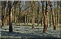 SU4073 : Snowdrops, Welford, Berkshire by Oswald Bertram
