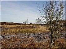 H5774 : Heathland, Mullaghslin Glebe by Kenneth  Allen